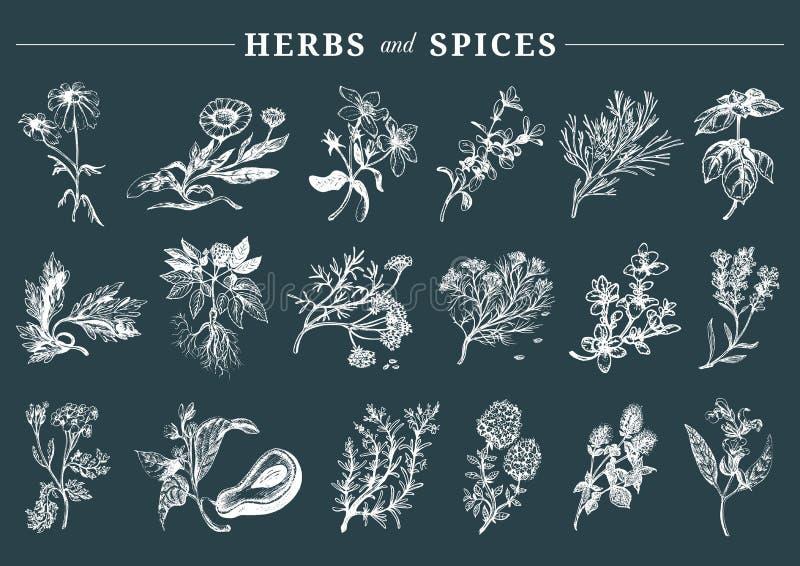 草本被设置的香料 手拉的officinalis,医药,化妆植物 标记的植物的例证 拟订等 皇族释放例证