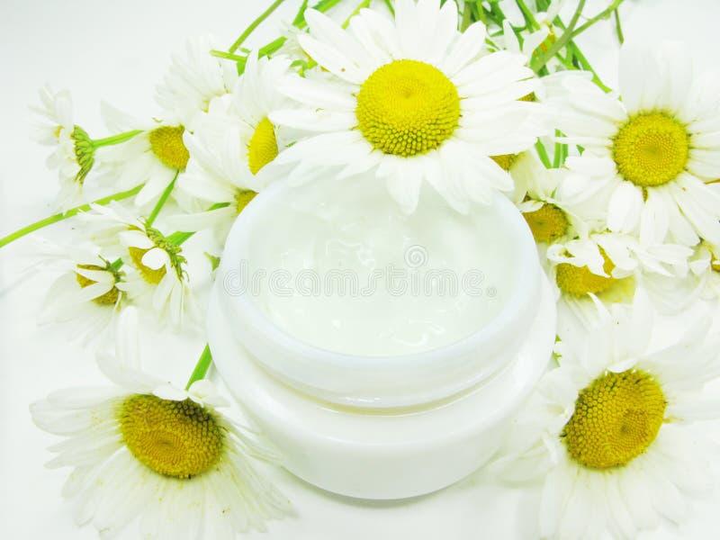草本装饰性的奶油雏菊解压缩的表面 库存图片