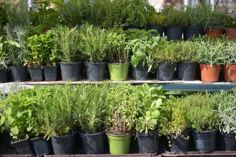 草本销售在花卉市场上 库存图片