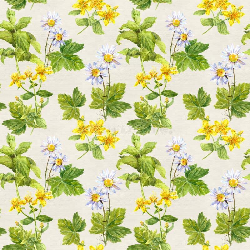 草本,花:春黄菊,金丝桃属植物 草本无缝的印刷品 花卉水彩 库存例证