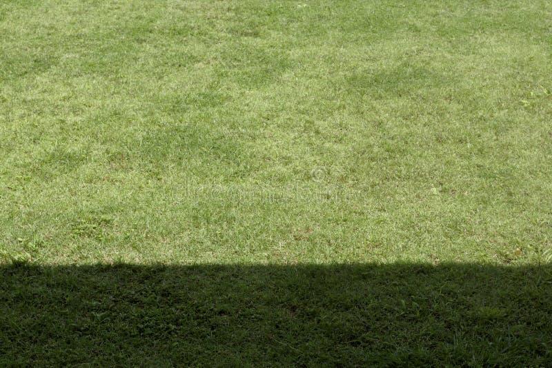 绿草树荫和阴影特写镜头 免版税图库摄影