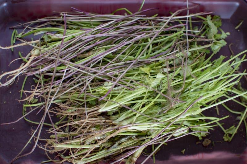 草植物绿色词根盘子的 库存图片