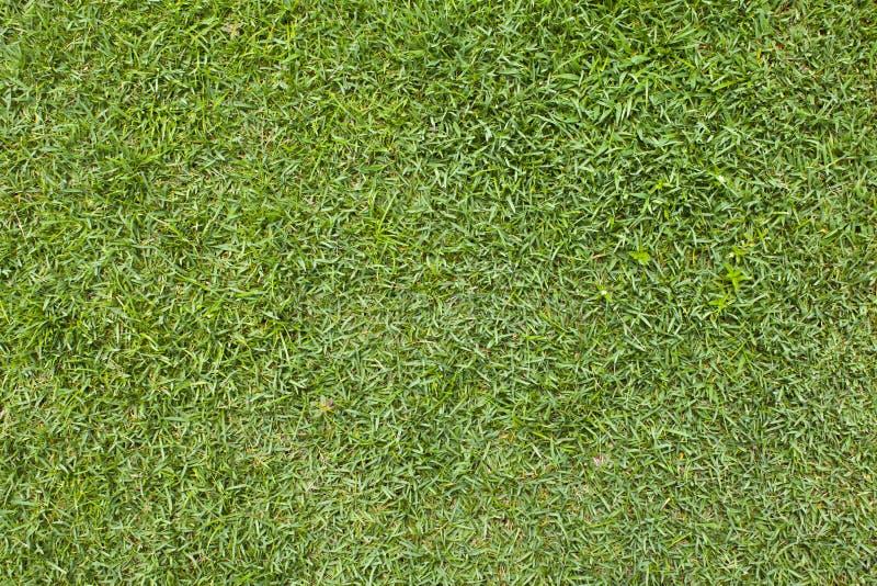 草模式。 库存照片