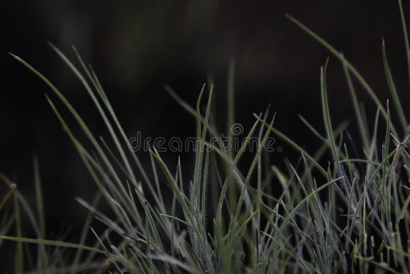 草涌现从被烧的丛的叶片 库存图片