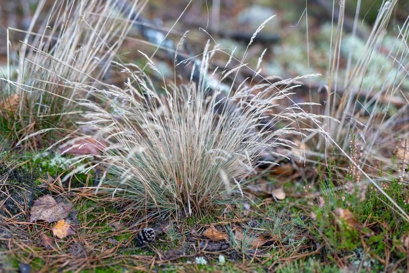 草生长由森林公路的干燥丛 森林隐生 免版税库存图片