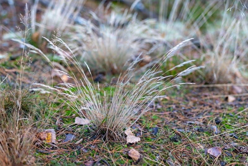 草生长由森林公路的干燥丛 森林隐生 库存图片