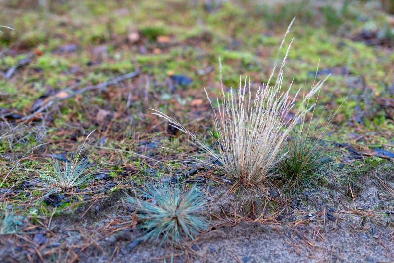 草生长由森林公路的干燥丛 森林隐生 图库摄影