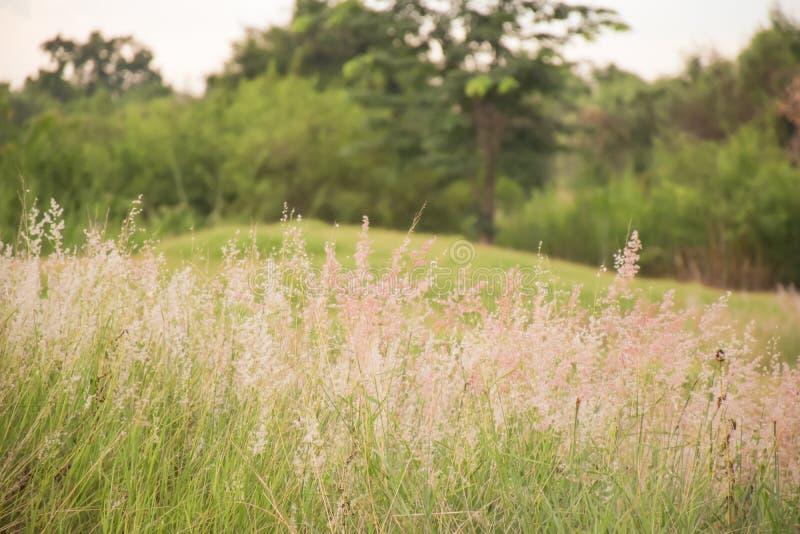 草由风吹 库存照片