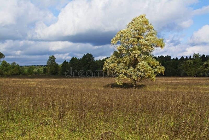 草甸、树和天空在令人愉快的光 _7 免版税库存图片