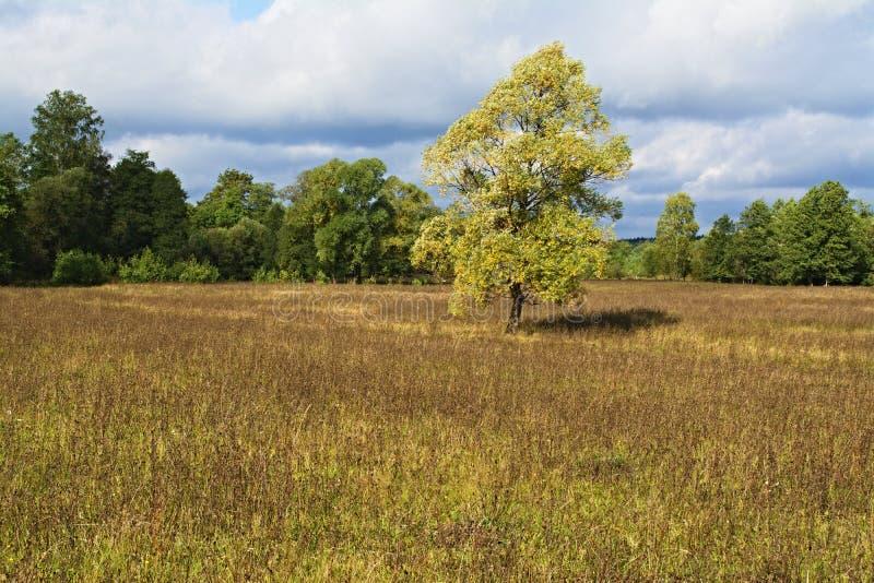 草甸、树和天空在令人愉快的光 _5 库存照片