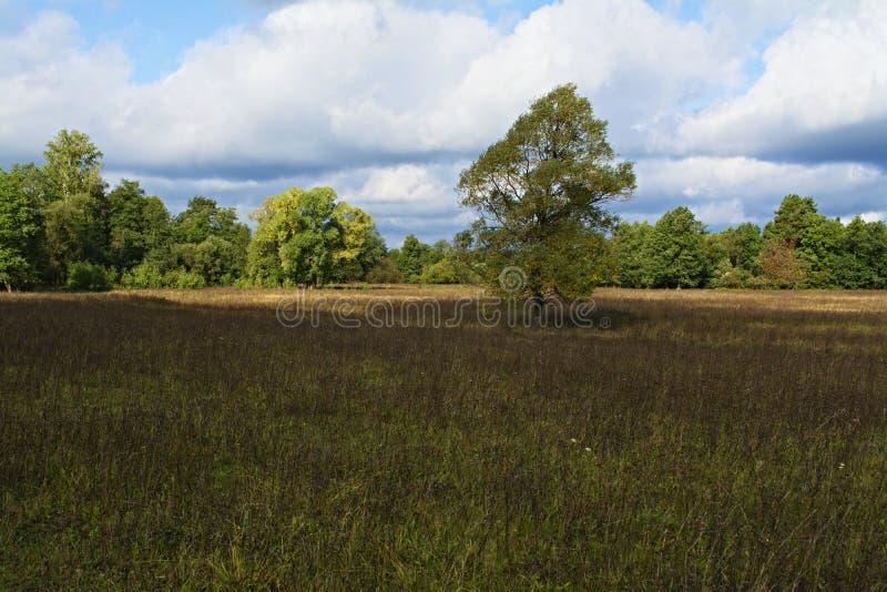 草甸、树和天空在令人愉快的光 _4 免版税库存照片