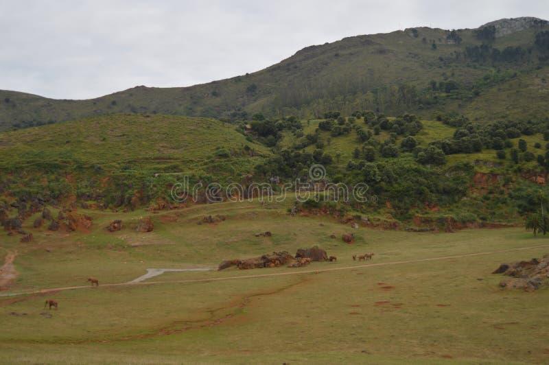 草甸充满吃草在铁的提取Cabarceno老矿自然公园的大象  2013?8?25? Cabarceno, 库存图片