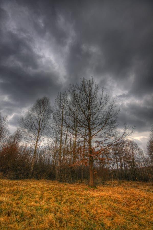 草甸和小森林在剧烈的天空下在早期的春天 免版税库存图片