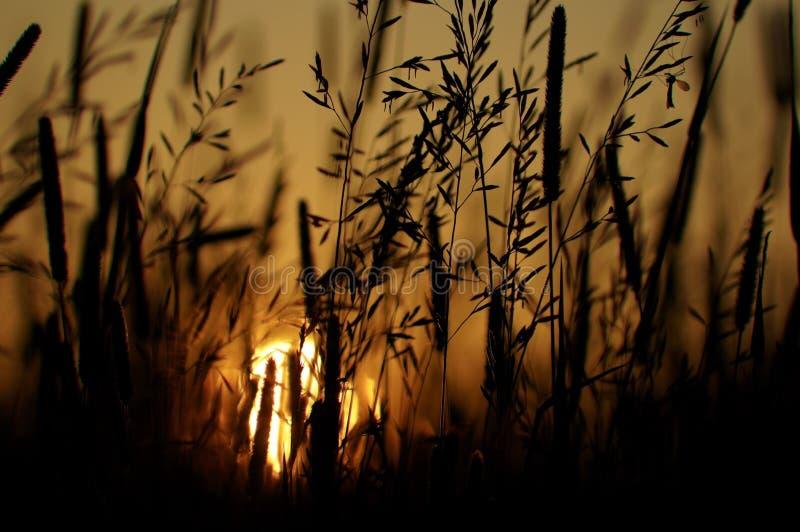 草甸和日落 库存图片