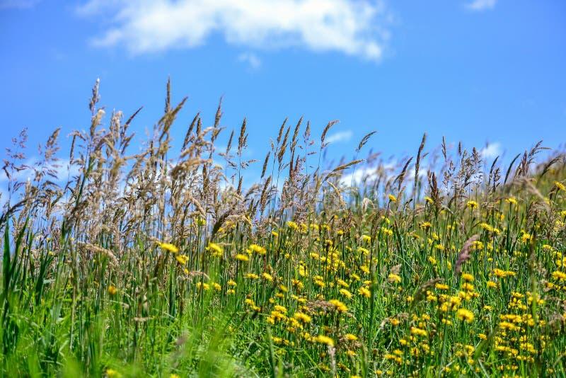 草甸和明白蓝天 库存照片