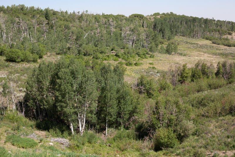 草甸和树丛 免版税库存图片
