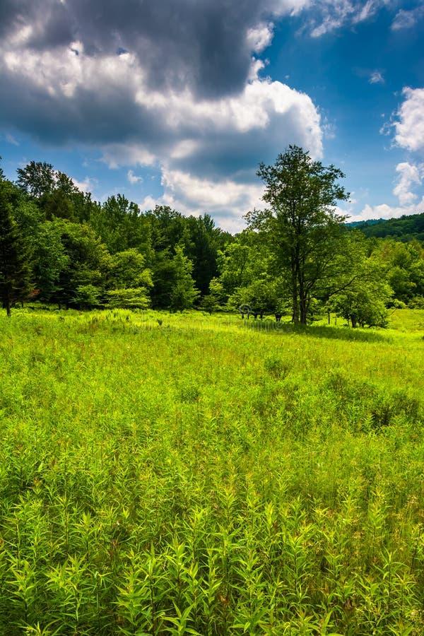 草甸和树在迦南谷国家公园,西维吉尼亚 免版税库存图片