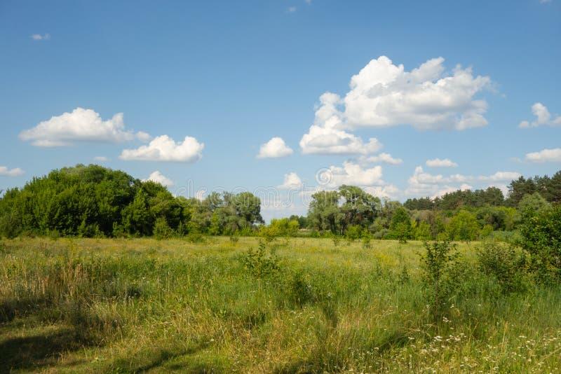 草甸和森林风景背景 与天空蔚蓝的好日子和白色云彩和绿草和树在夏季 免版税库存照片