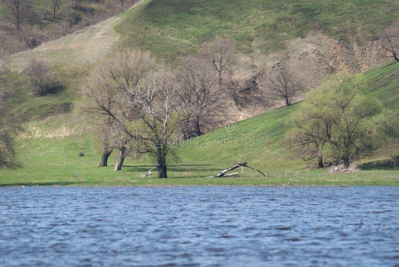 草甸和牧场地多小山谷的充斥了与春天河小河 在一个山坡的树在湖附近浇灌 免版税库存图片