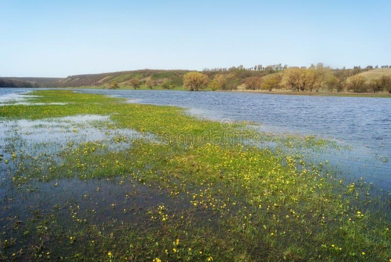 草甸和牧场地多小山谷的充斥了与春天河小河 花在水中间的海岛小岛 库存照片