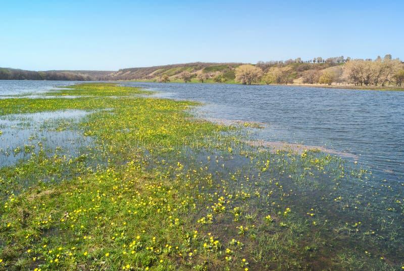 草甸和牧场地多小山谷的充斥了与春天河小河 花在水中间的海岛小岛 免版税库存图片