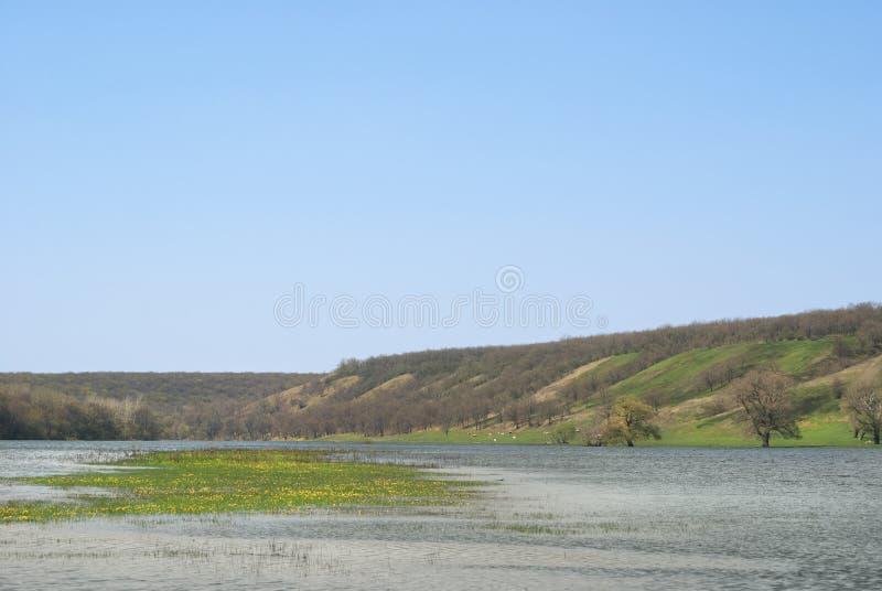 草甸和牧场地多小山谷的充斥了与春天河小河 花在水中间的海岛小岛 免版税图库摄影