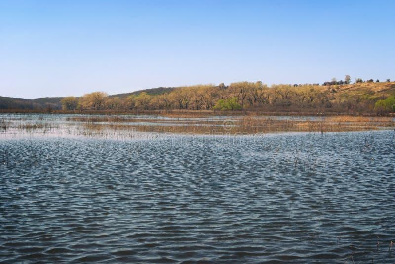 草甸和牧场地多小山谷的充斥了与春天河小河 库存照片