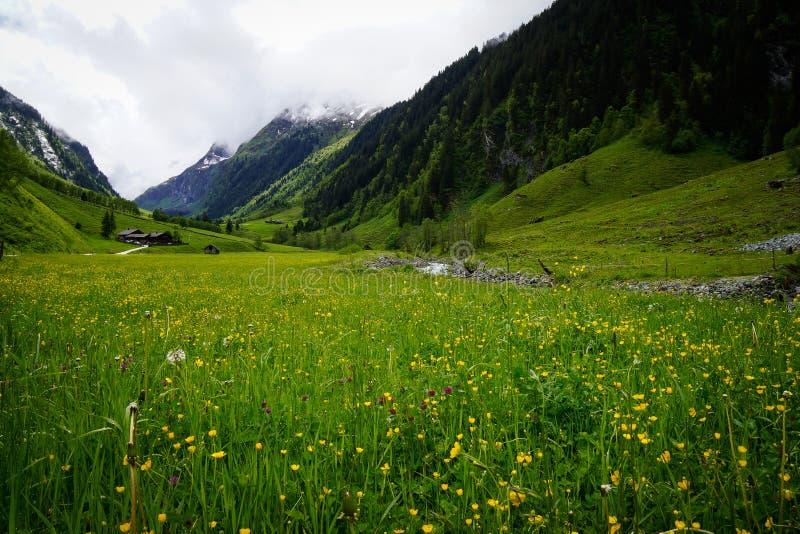 草甸在山前面的阿尔卑斯 免版税库存照片