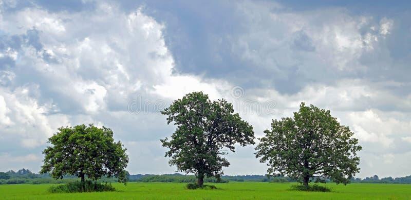 草甸在普里皮亚季河的洪泛区 三个橡树 免版税图库摄影