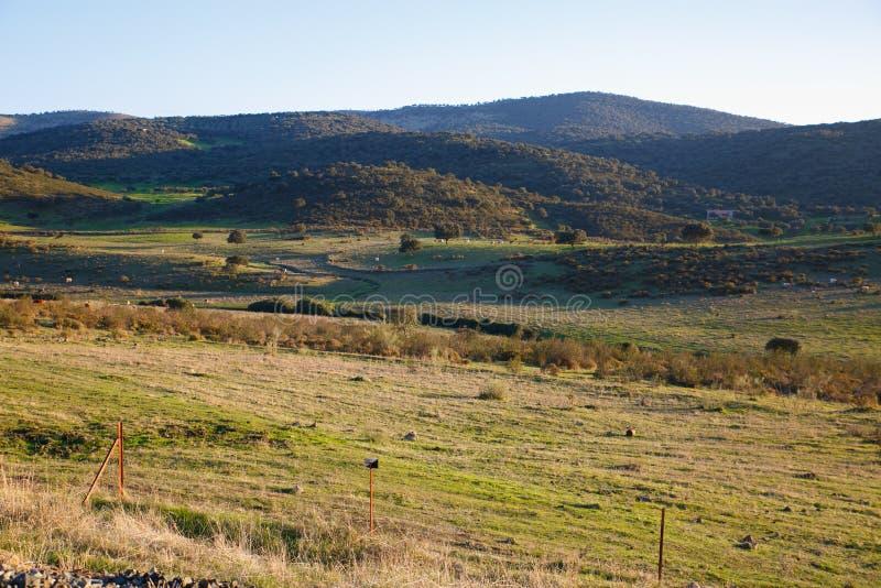 草甸在有山的春天 库存照片