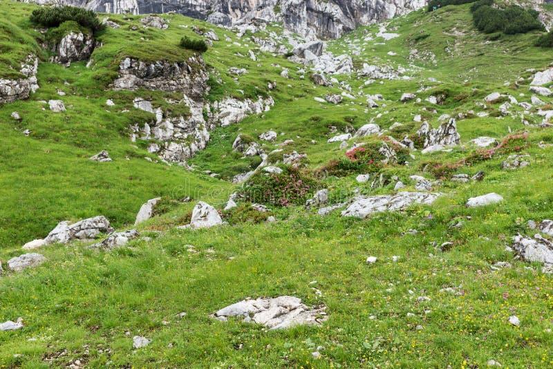 草甸在有石头的巴法力亚阿尔卑斯 免版税库存照片