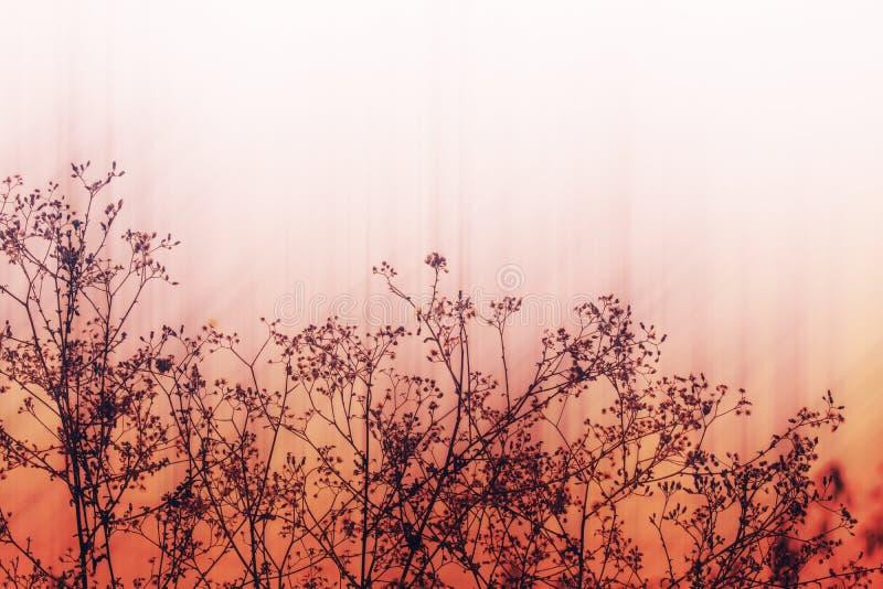 草甸开花,在软的温暖的光的美好的新早晨 Vint 免版税图库摄影