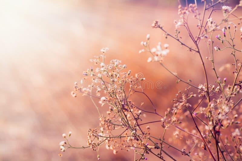 草甸开花,在软的温暖的光的美好的新早晨 Vint 库存照片
