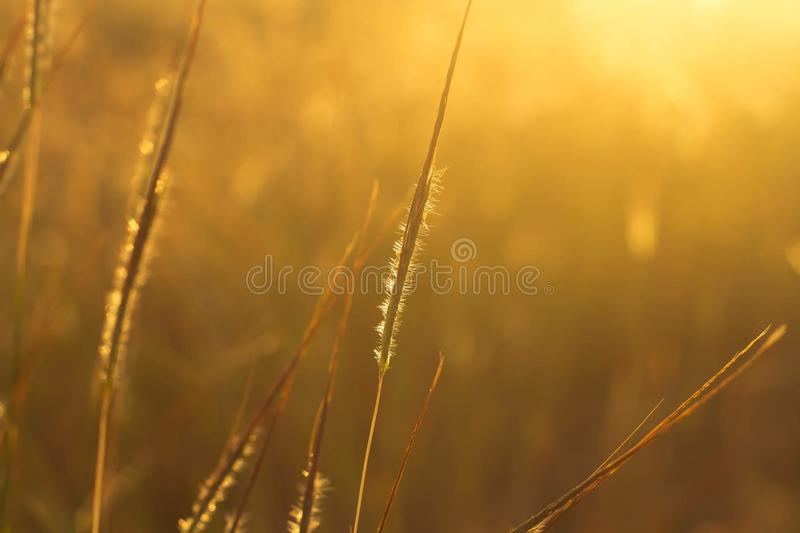 草甸日落 库存图片