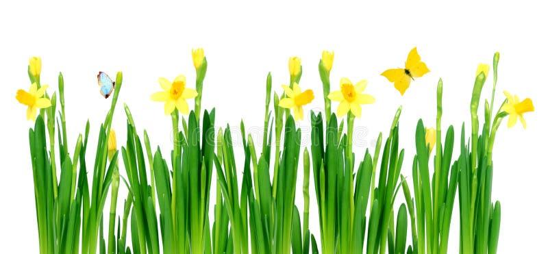 草甸春天 库存图片