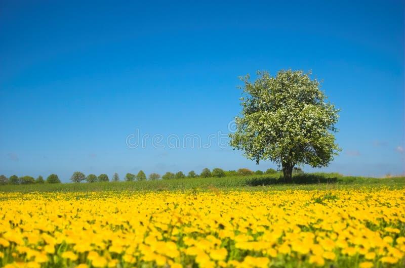 草甸春天 免版税库存图片