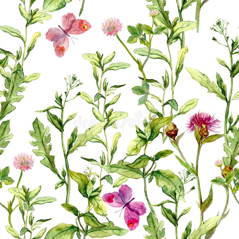 草甸用草本、花和蝴蝶 无缝的葡萄酒水彩样式 向量例证