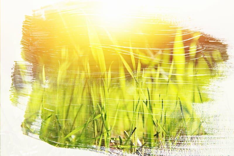 草甸的梦想和抽象图象有绿色年轻草的 与水彩刷子冲程纹理的两次曝光作用 免版税图库摄影