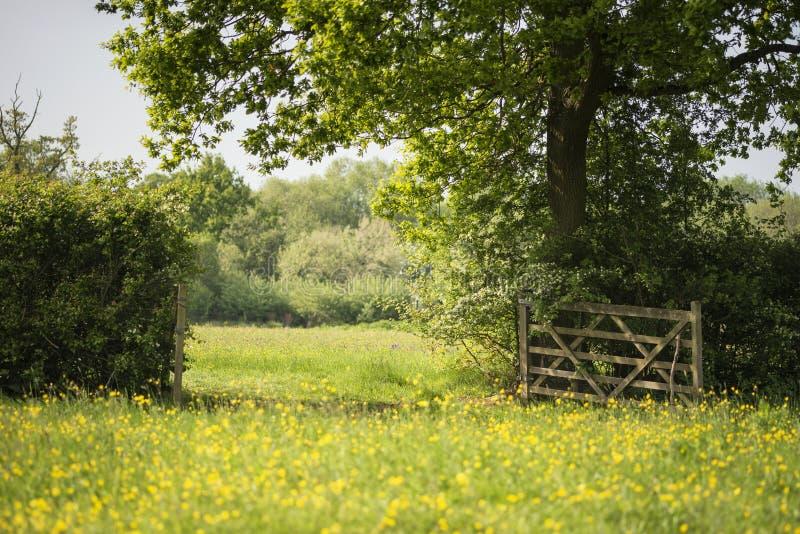 草甸的美好的英国乡下风景图象在Sprin 免版税图库摄影