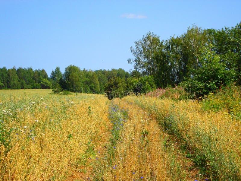 草甸花在夏天森林里 库存照片