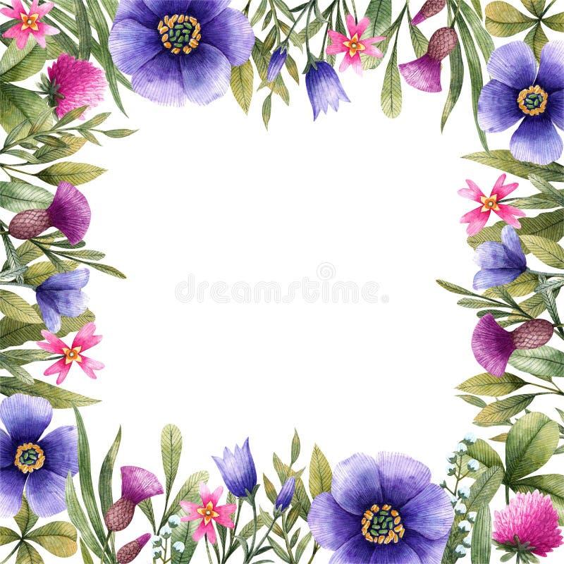 草甸花方形的边界  库存图片