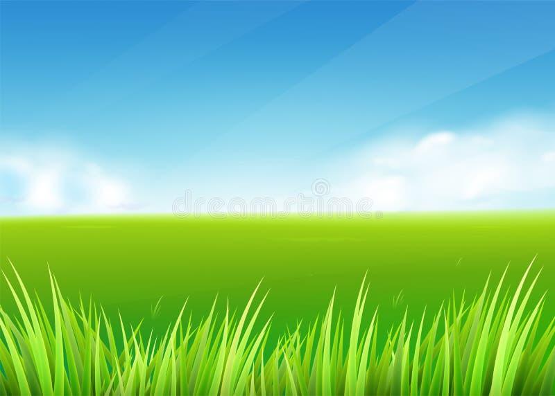 草甸领域 夏天或春天与绿草风景的自然背景 向量例证