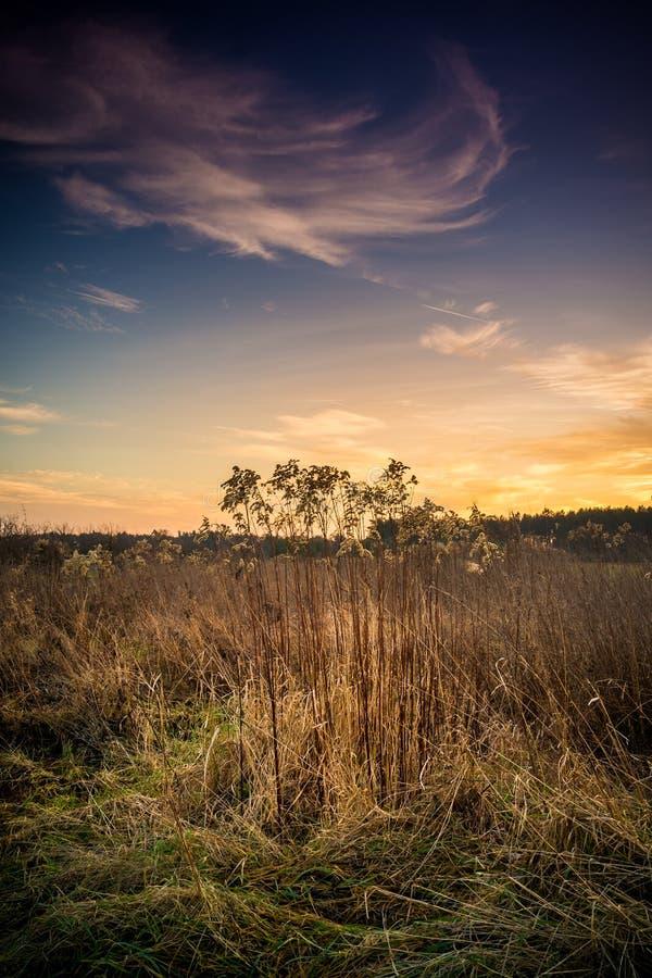 草甸-多年生植物创建的植物社区用草一个重要份额  图库摄影