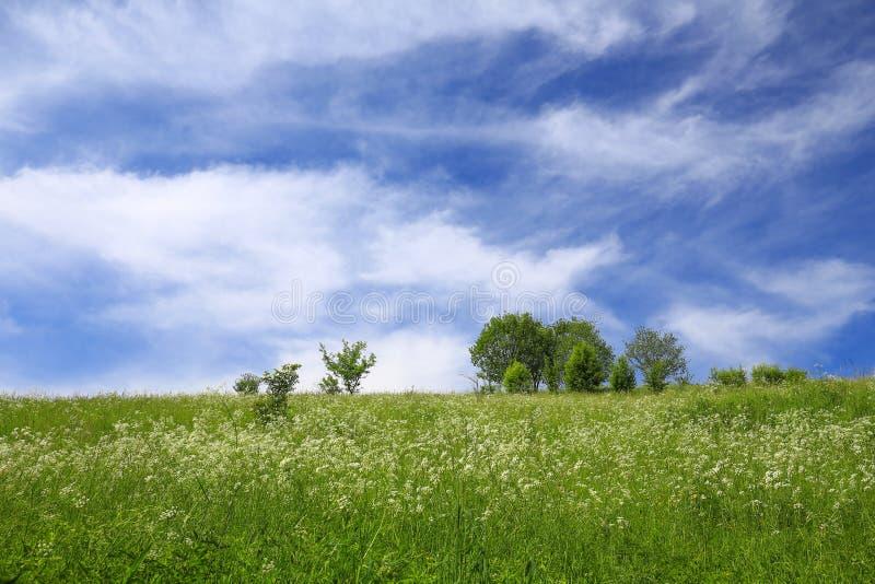 Download 草甸/风景的风景看法 库存照片. 图片 包括有 结构树, 草原, 横向, 自然, 风景, 的treadled - 72358326