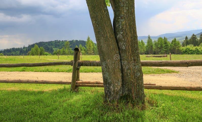 Download 草甸/风景的风景看法 库存图片. 图片 包括有 风景, 草甸, 种秣草地, 本质, 预留, 自然, 草原 - 72358437