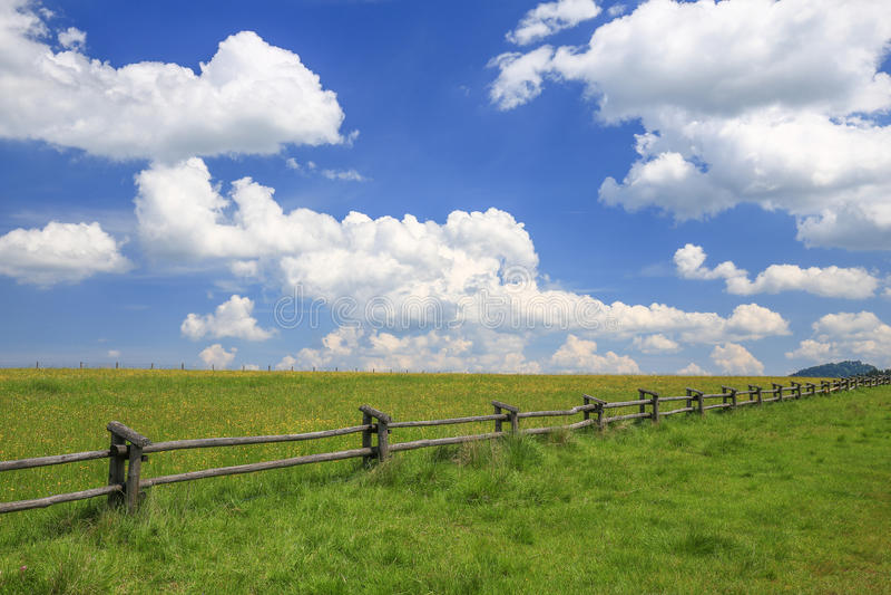 Download 草甸/风景的风景看法 库存图片. 图片 包括有 横向, 结构树, 新鲜, 草原, 预留, 科学, 视图, 风景 - 72358479