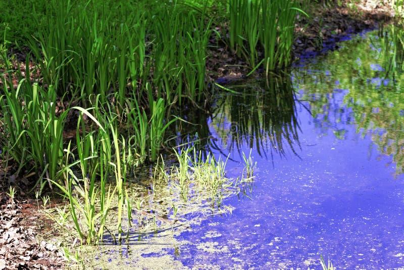 草的反射在池塘 免版税库存图片