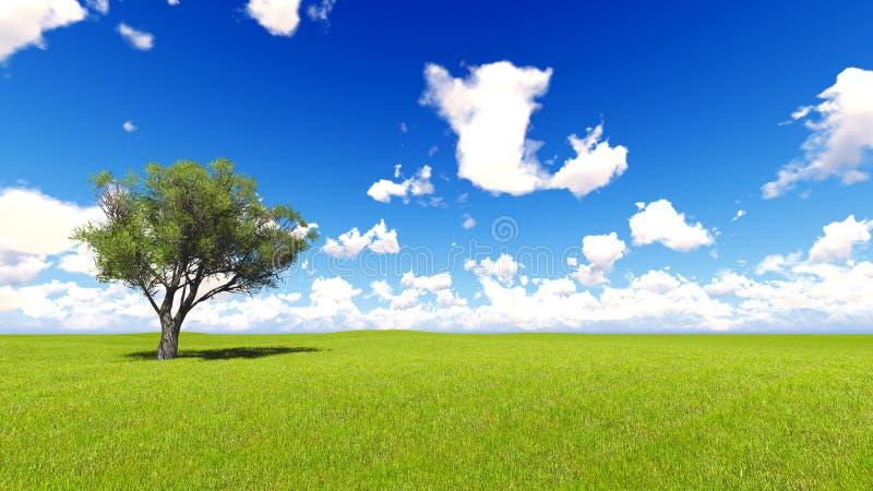 草的树领域和完善的天空使3D翻译环境美化 免版税库存照片