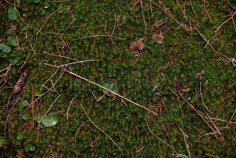 草的自然绿色背景关闭 库存图片