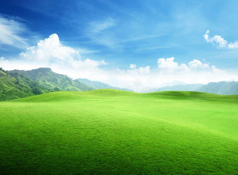草的领域在山的 库存照片